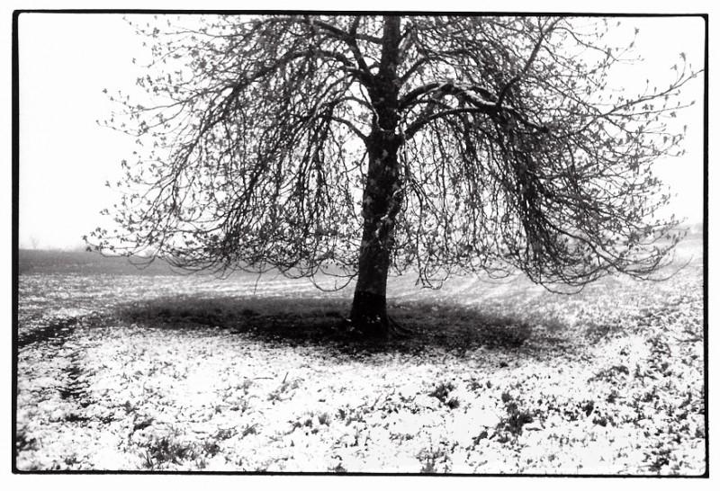 Le marronnier, Aveyron, clichés noir et blanc argentique, Jean-Pierre Devals