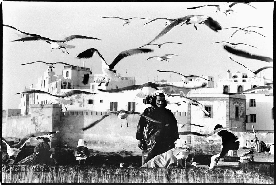 Tri du poisson, Essaouira, Maroc, photo noir et blanc, Jean-Pierre Devals